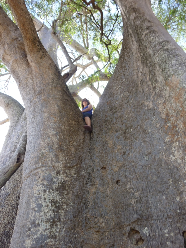 Me in the hugest baobab